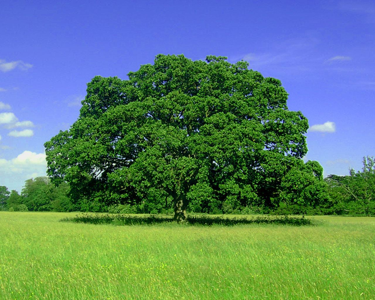 Фото дерев для дітей 11 фотография